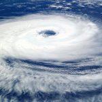 台風の真っ最中カラスはどこに避難しているの?