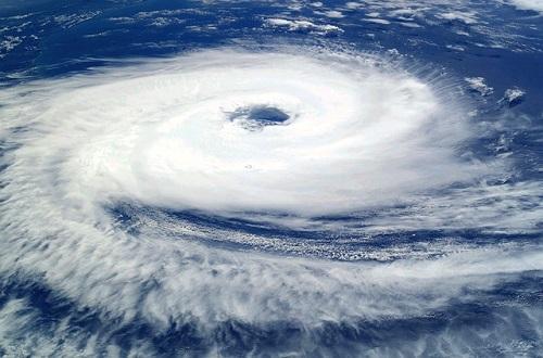 カラス 台風