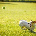 カラスの知能と犬の知能、どちらが上?