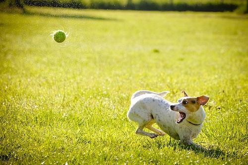 カラス 犬 知能